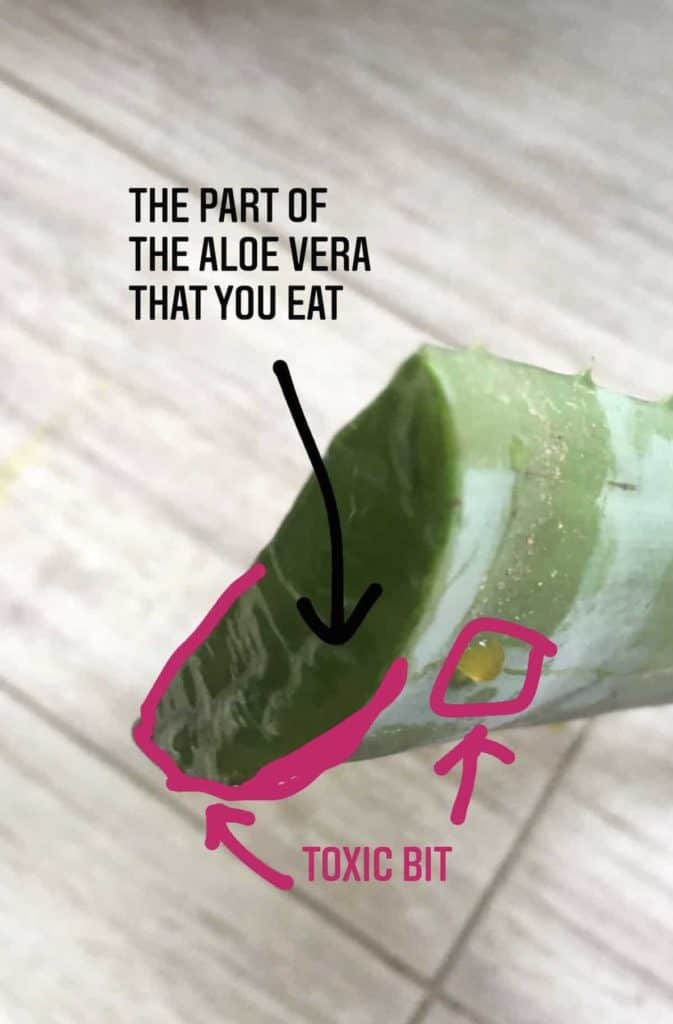 Showing which part of the aloe vera plant is toxic vs edible